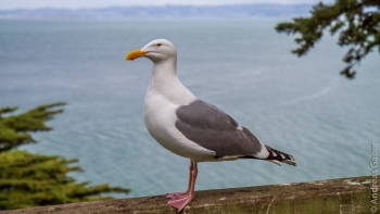 Alcatraz_0315-04